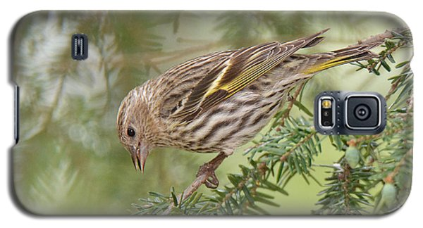 Pine Siskin Galaxy S5 Case