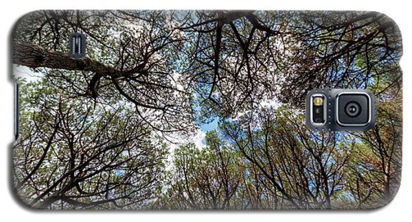Pinewood Forest, Cecina, Tuscany, Italy Galaxy S5 Case