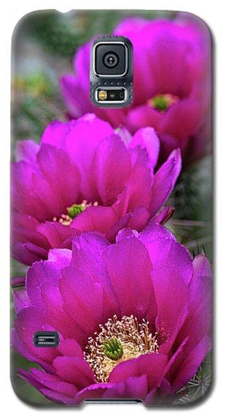 Galaxy S5 Case featuring the photograph Pink Hedgehog Cactus  by Saija Lehtonen