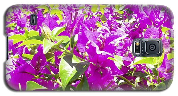 Ponce Urban Ecological Park Galaxy S5 Case