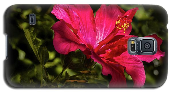 Galaxy S5 Case featuring the photograph Red Hibiscus by Robert Bales