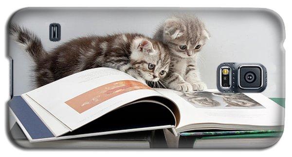Scottish Fold Cats Galaxy S5 Case by Evgeniy Lankin