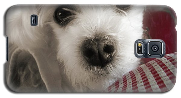 Yorkie Heichel Portrait 3 Galaxy S5 Case