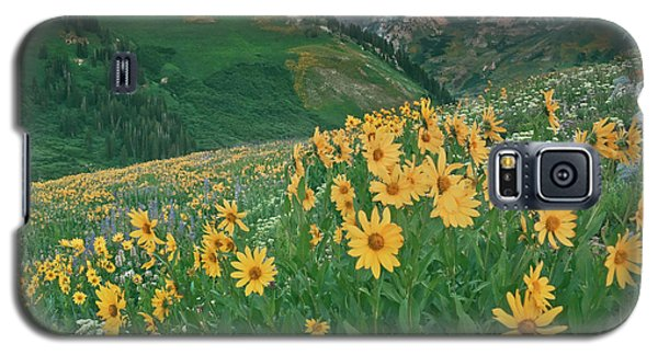 Albion Basin Wildflowers Galaxy S5 Case