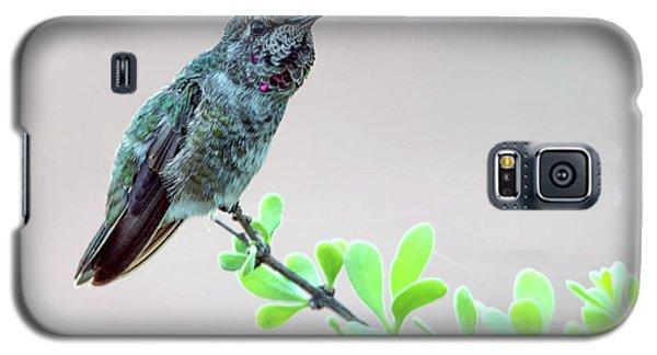 Anna's Hummingbird Galaxy S5 Case by Tam Ryan