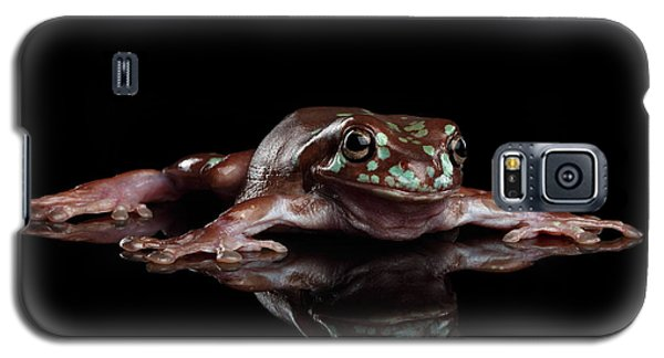 Australian Green Tree Frog, Or Litoria Caerulea Isolated Black Background Galaxy S5 Case by Sergey Taran