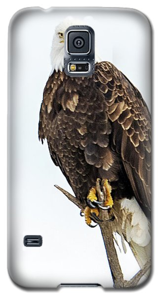 Bald Eagle Galaxy S5 Case