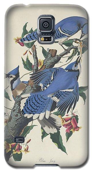 Blue Jay Galaxy S5 Case by Rob Dreyer