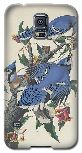 Bluejay Galaxy S5 Case - Blue Jay by Dreyer Wildlife Print Collections