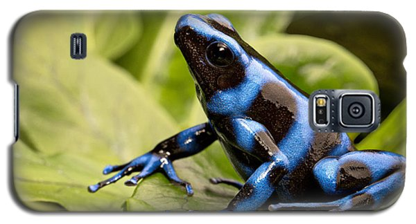 Blue Poison Dart Frog Galaxy S5 Case