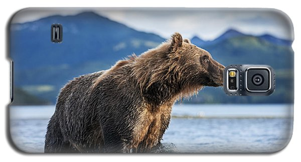 Coastal Brown Bear  Ursus Arctos Galaxy S5 Case by Paul Souders