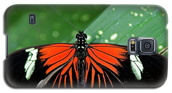 Doris Longwing Butterfly Galaxy S5 Case