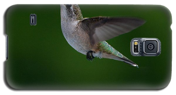 Female Ruby Throated Hummingbird Galaxy S5 Case by Brenda Jacobs