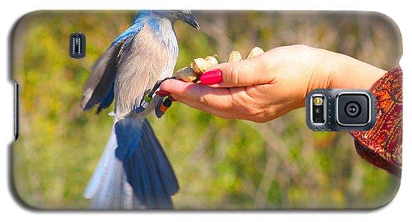 Florida Scrub Jay Galaxy S5 Case