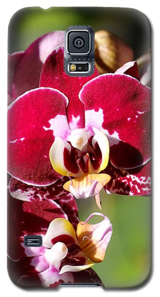Galaxy S5 Case featuring the photograph Flower Edition by Bernd Hau