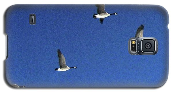 4 Geese In Flight Galaxy S5 Case