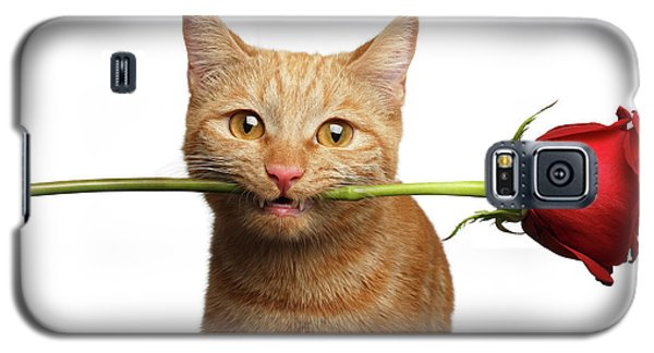 Portrait Of Ginger Cat Brought Rose As A Gift Galaxy S5 Case