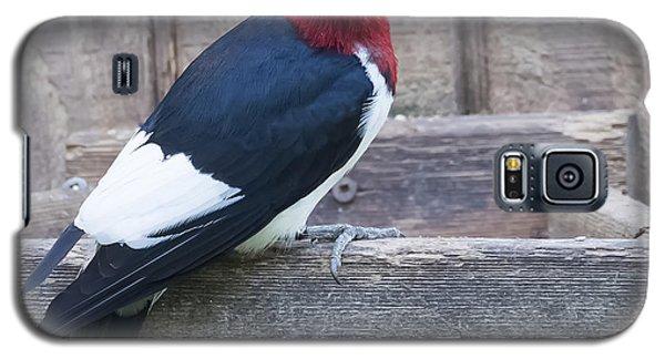 Red-headed Woodpecker Galaxy S5 Case by Ricky L Jones