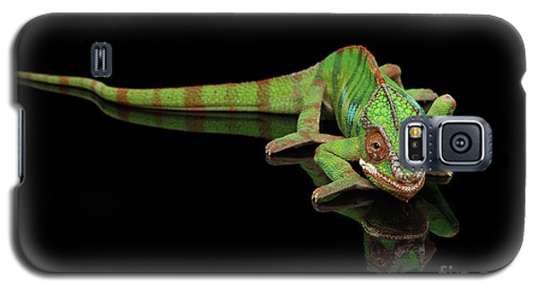 Sneaking Panther Chameleon, Reptile With Colorful Body On Black Mirror, Isolated Background Galaxy S5 Case