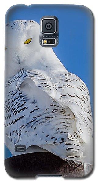 Snowy Owl Galaxy S5 Case by Dan Traun