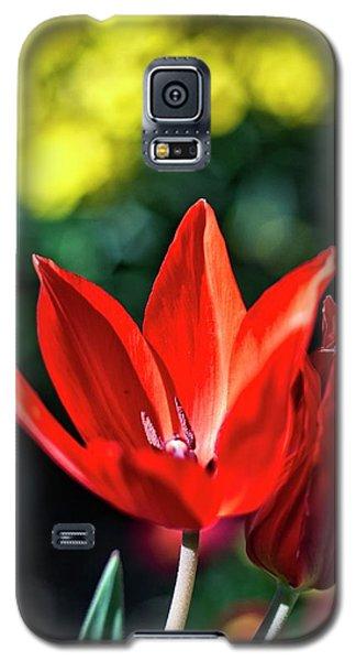 Spring Garden Galaxy S5 Case by Miguel Winterpacht