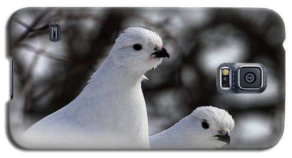 Willow Ptarmigan Galaxy S5 Case