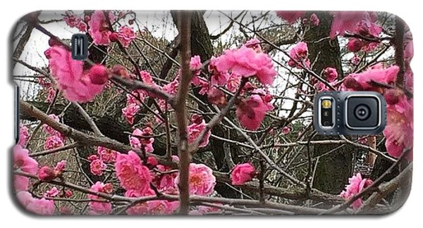 Style Galaxy S5 Case - #kyoto #fun #beautiful #japan #cool by Shimada Toshio