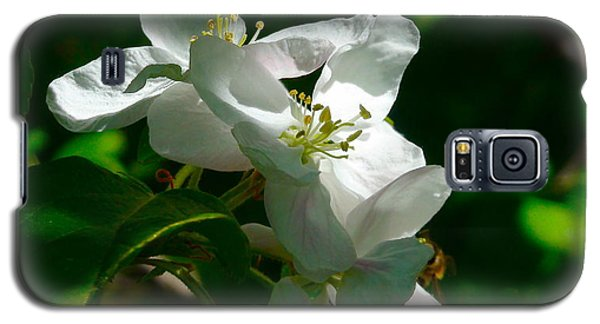 Galaxy S5 Case featuring the photograph Apple Blossoms by Johanna Bruwer