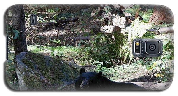 Black Bear Galaxy S5 Case by Janice Spivey