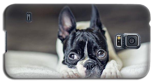 Boston Terrier Puppy Galaxy S5 Case by Nailia Schwarz