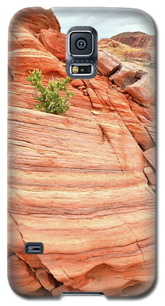 Galaxy S5 Case featuring the photograph Colorful Wash In Valley Of Fire by Ray Mathis