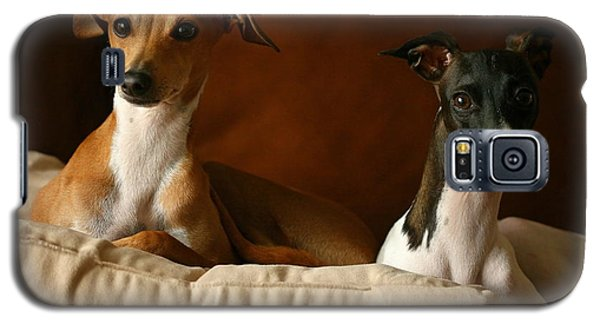 Italian Greyhounds Galaxy S5 Case