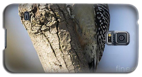 Red-bellied Woodpecker Galaxy S5 Case by Ricky L Jones