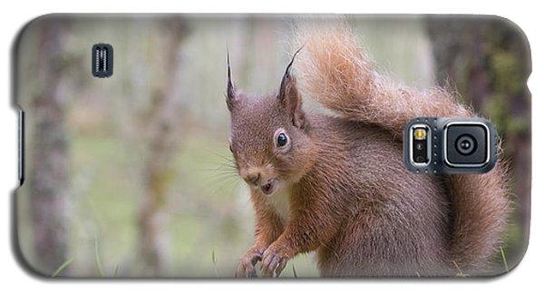 Red Squirrel - Scottish Highlands #8 Galaxy S5 Case