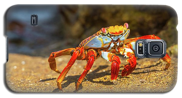 Sally Lightfoot Crab On Galapagos Islands Galaxy S5 Case