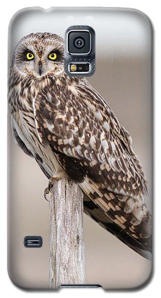 Short Eared Owl Galaxy S5 Case by Ian Hufton