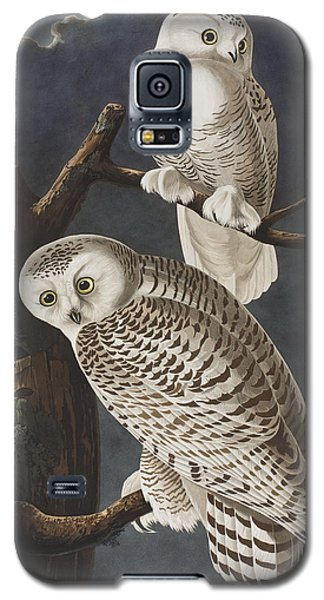 Snowy Owl Galaxy S5 Case by John James Audubon