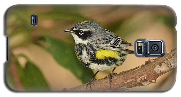 Yellow-rumped Warbler Galaxy S5 Case by Alan Lenk