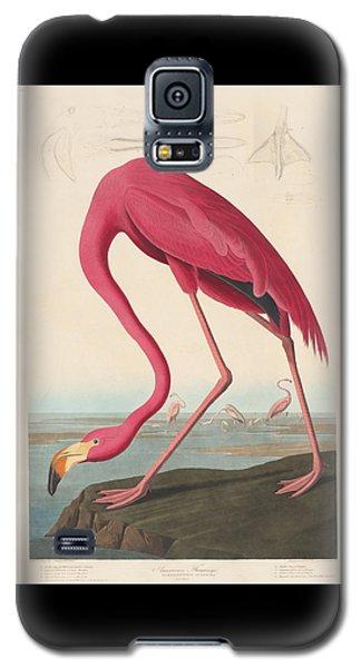 American Flamingo Galaxy S5 Case