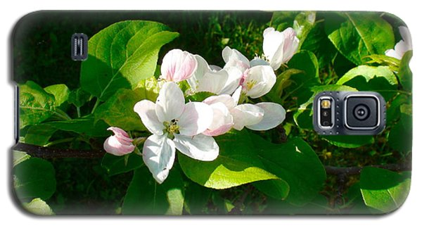 Apple Blossoms Galaxy S5 Case by Johanna Bruwer