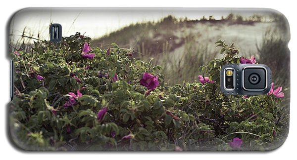 Rose Bush And Dunes Galaxy S5 Case