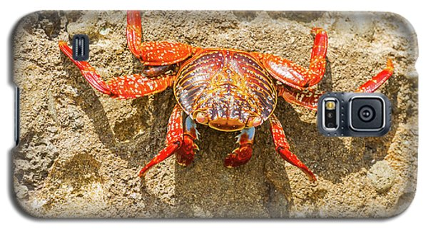 Sally Lightfoot Crab On Galapagos Islands Galaxy S5 Case by Marek Poplawski