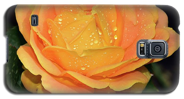Beautiful Rose Galaxy S5 Case