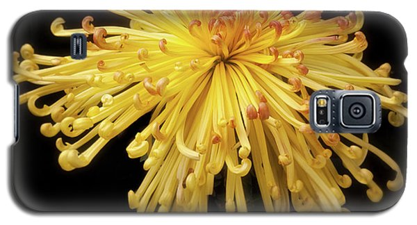 Chrysanthemum 'lava' Galaxy S5 Case