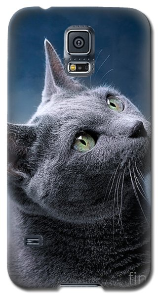 Cats Galaxy S5 Case - Russian Blue Cat by Nailia Schwarz