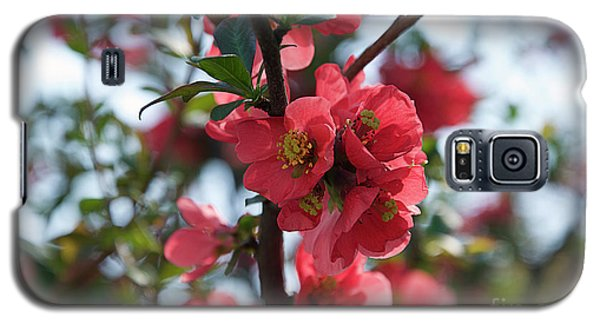 Tree Blossoms Galaxy S5 Case by Elvira Ladocki