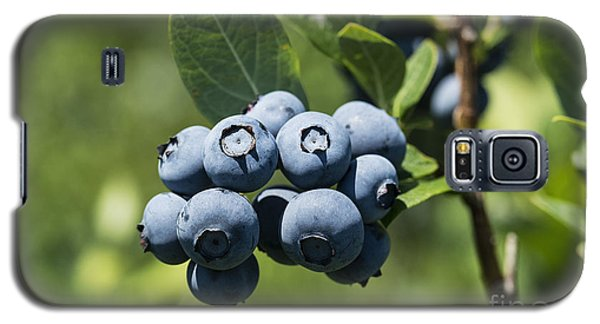 Blueberry Bush Galaxy S5 Case