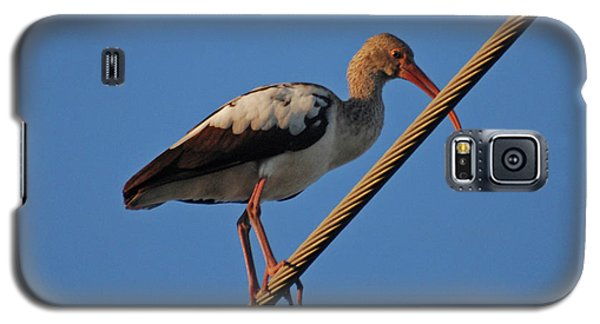 Galaxy S5 Case featuring the photograph 8- Brown Ibis by Joseph Keane