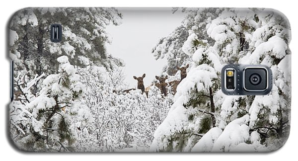Elk In Deep Snow In The Pike National Forest Galaxy S5 Case