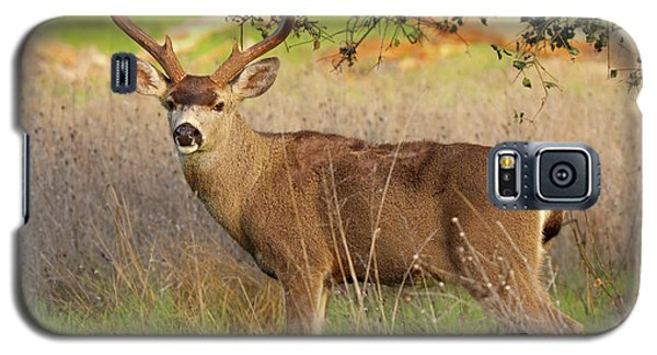Galaxy S5 Case featuring the photograph 8-point Black-tailed Deer Buck Broadside by Max Allen
